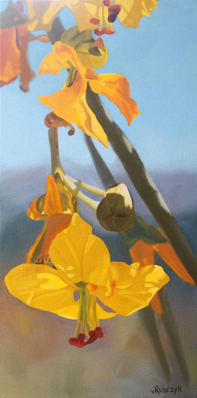 "Palo Verde Blossoms - Oil on Canvas, 24"" x 12"""