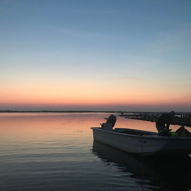 Sunsets on Barnstable Harbor - @moonshoaloysters