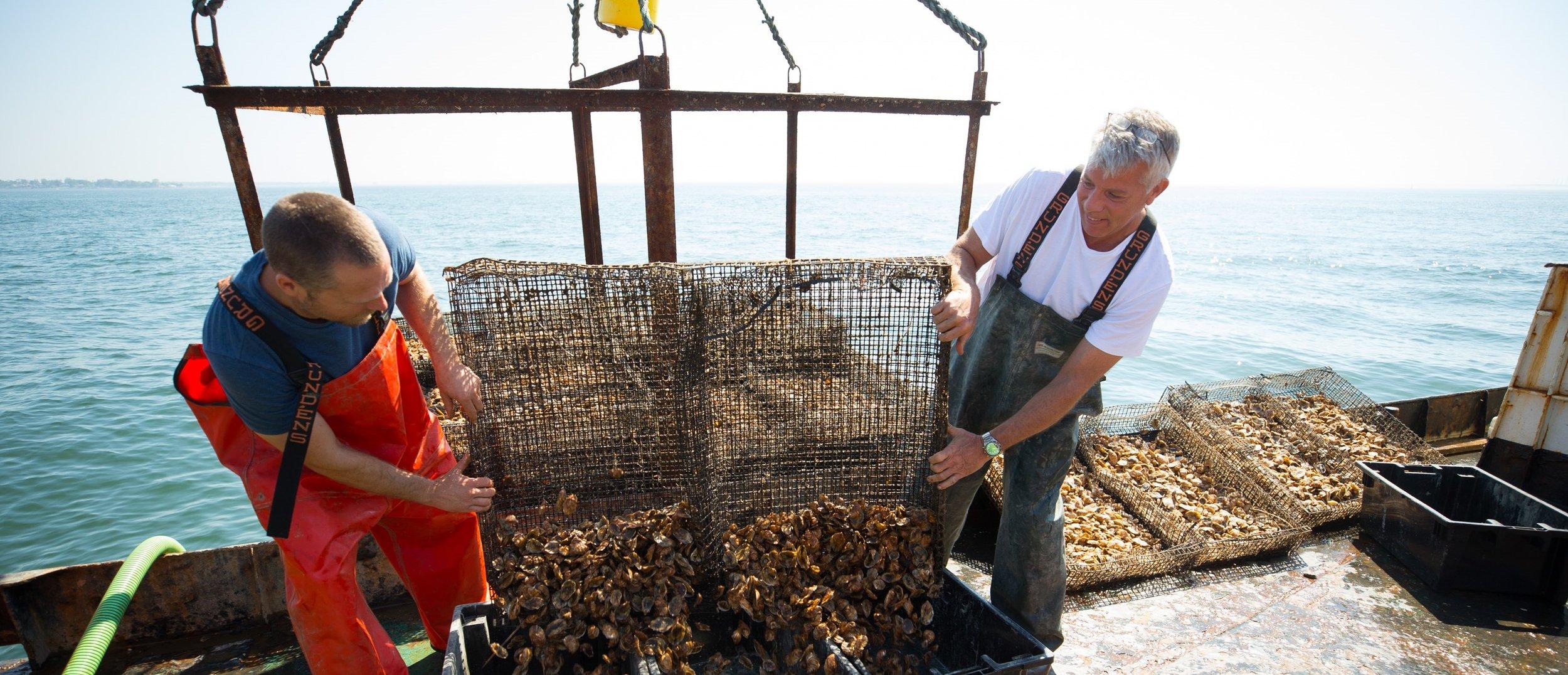 Jardar & Steve unloading oysters. Source: www.stellamaroysters.com