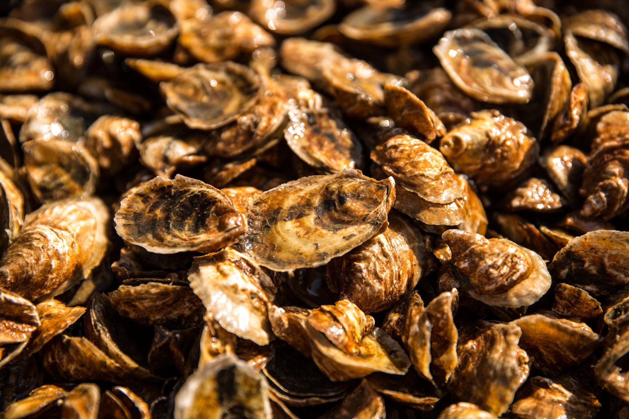 Stella Mar Oysters. Source: www.stellamaroysters.com