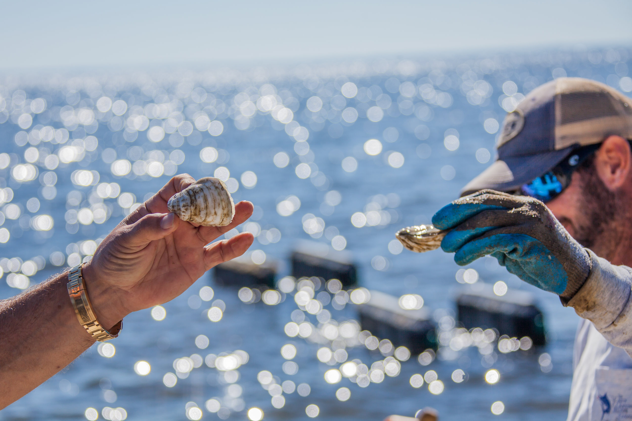 Pensacola Bay Oysters. Source: Steven Gray Photography