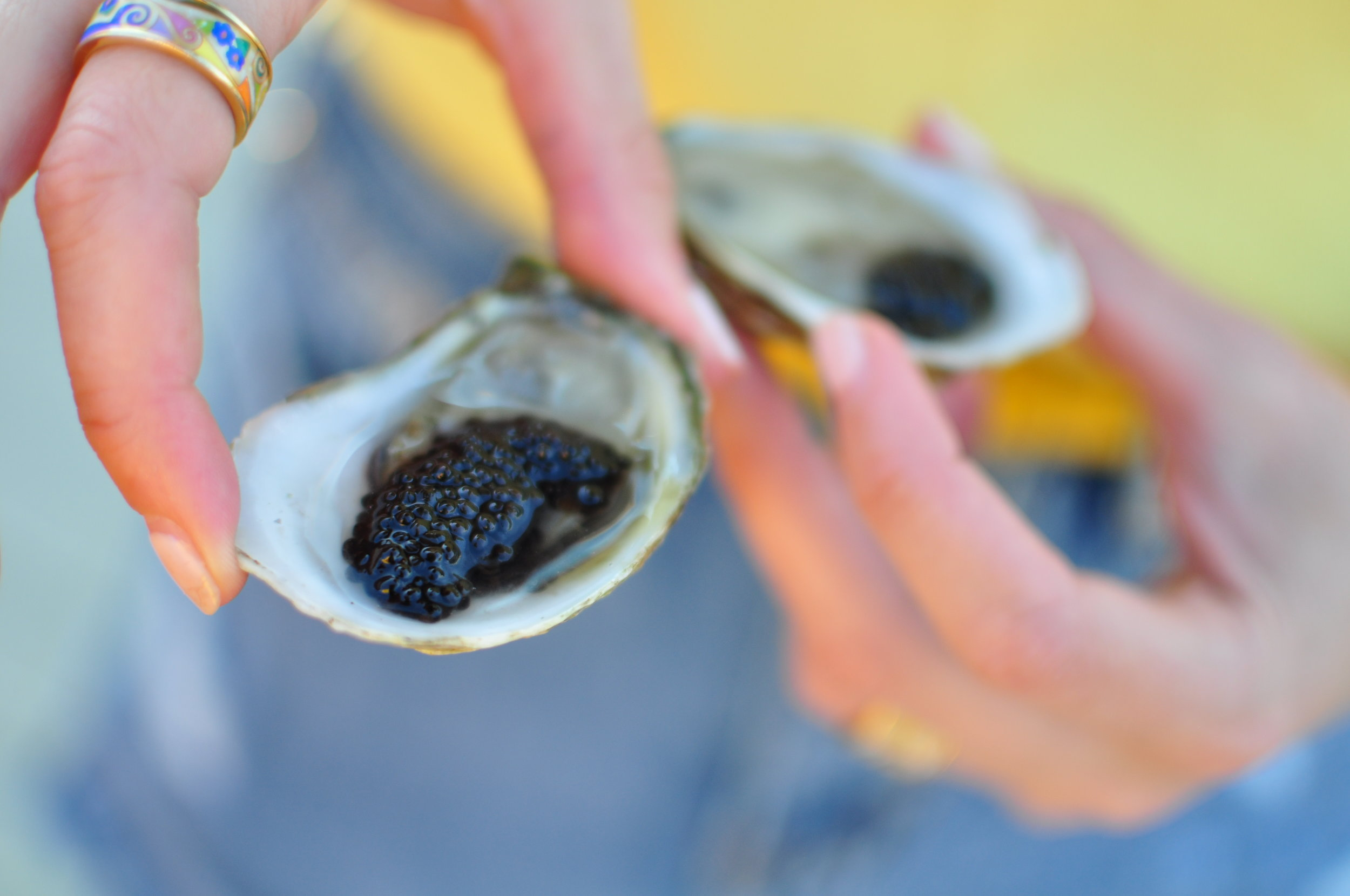 EBO Yellow Party. Caviar on oysters. Photo cred: Warwick Ombler of Lady Oyster.
