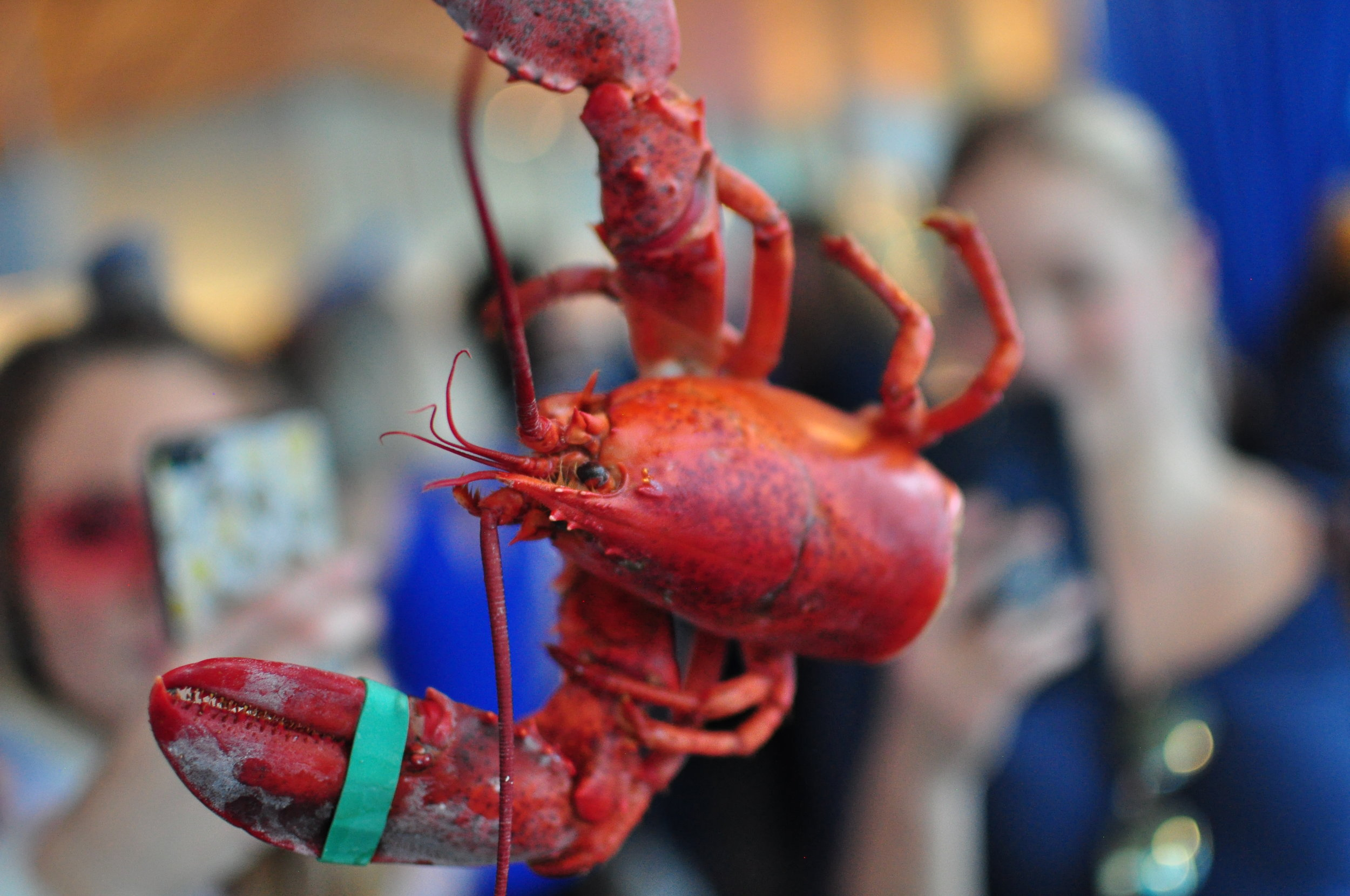 Heaps of lobsters at EBO's deep blue sea party. Photo cred: Warwick Ombler of Lady Oyster.