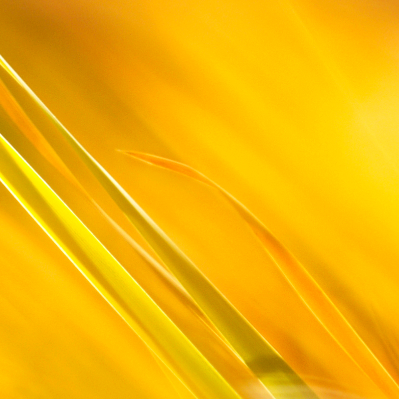 singlegrasscrop.jpg