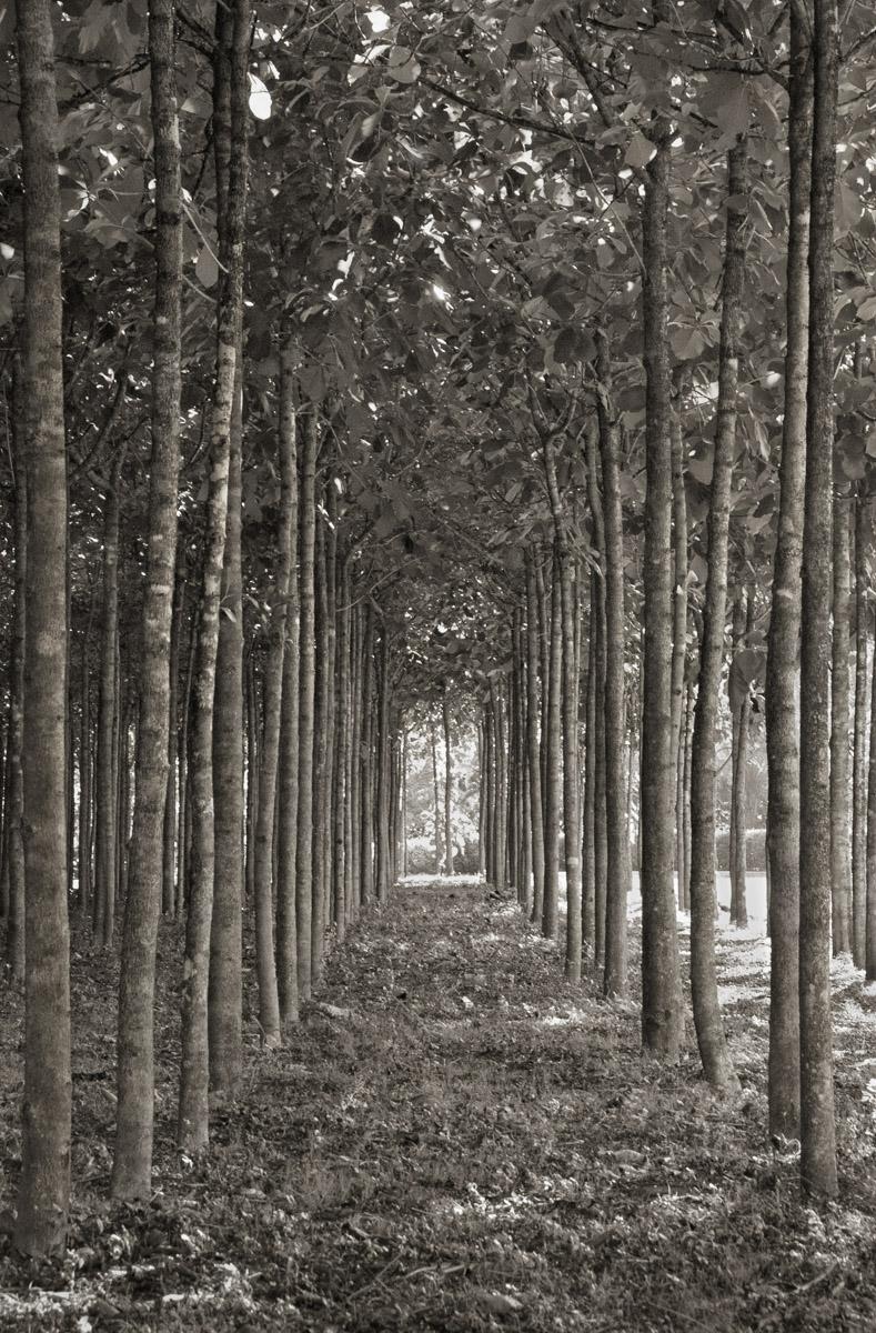 TreeFarm_bw.jpg