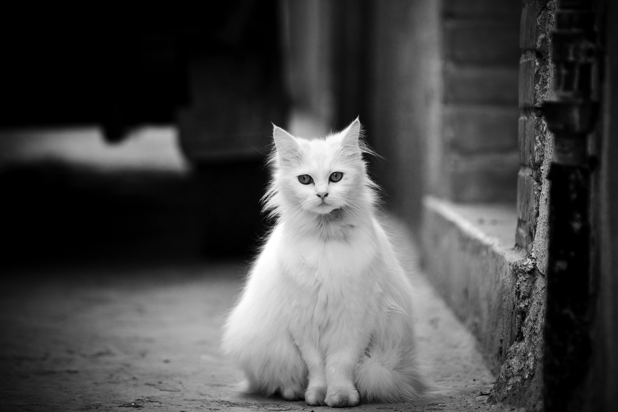 shadow-cat.jpg