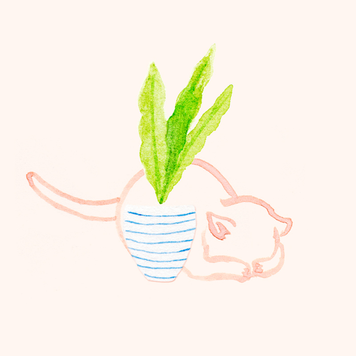 Hiding cat by illustrator Amy Oreo | Quirky and whimsical freelance illustration
