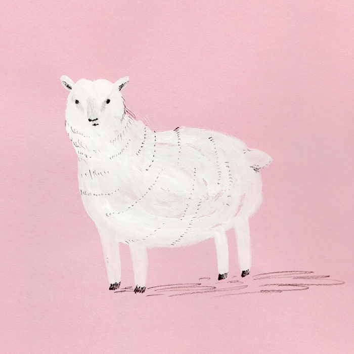 Amy_Oreo_Sheep.jpg