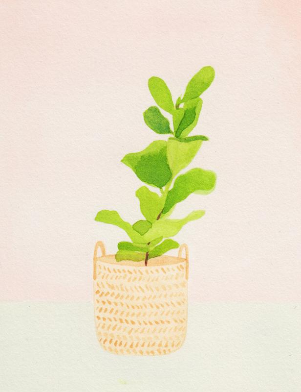 Fiddle Leaf Fig by Amy Oreo | Illustrator + Designer