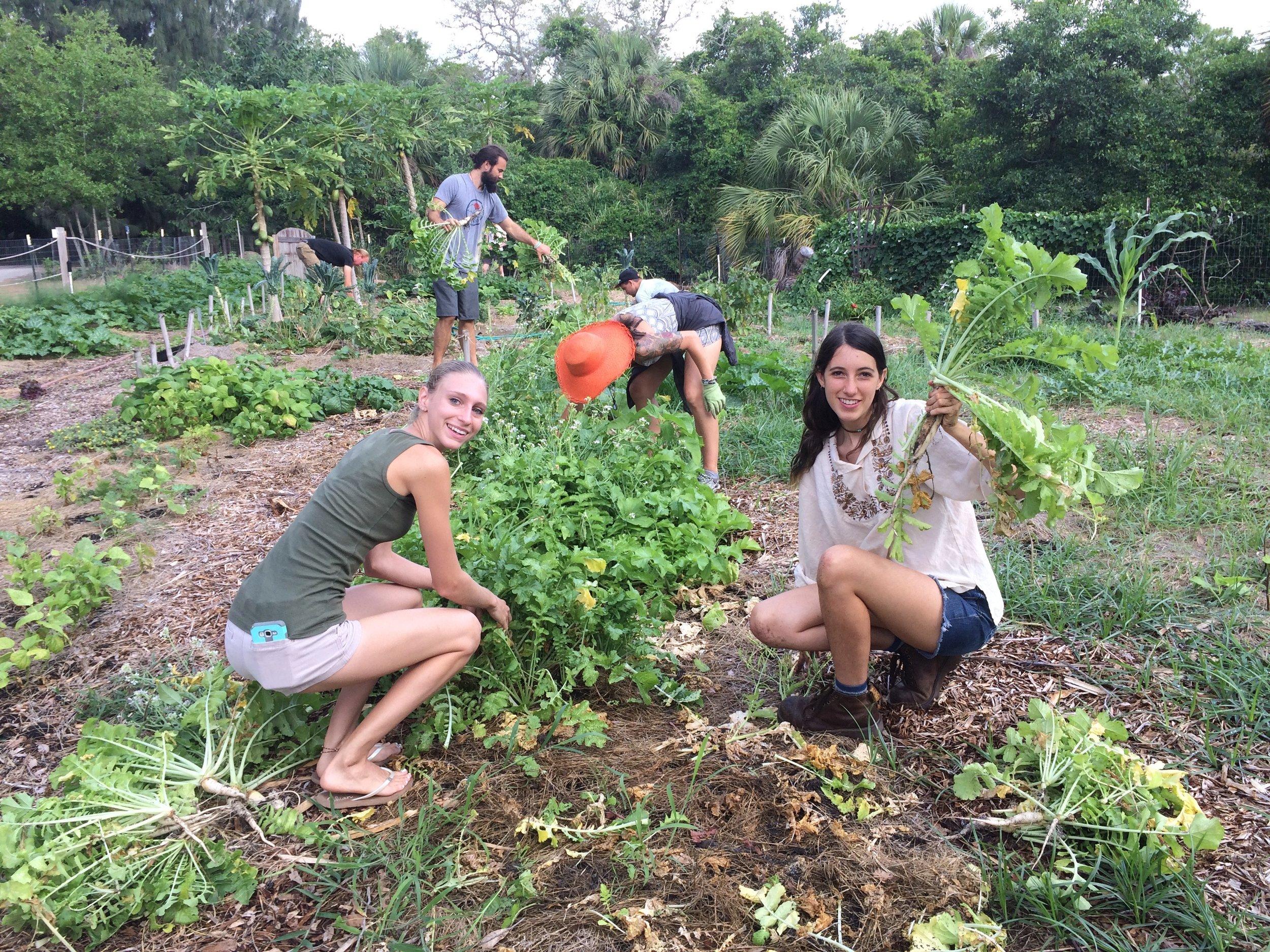 Sustainable Kashi Volunteers