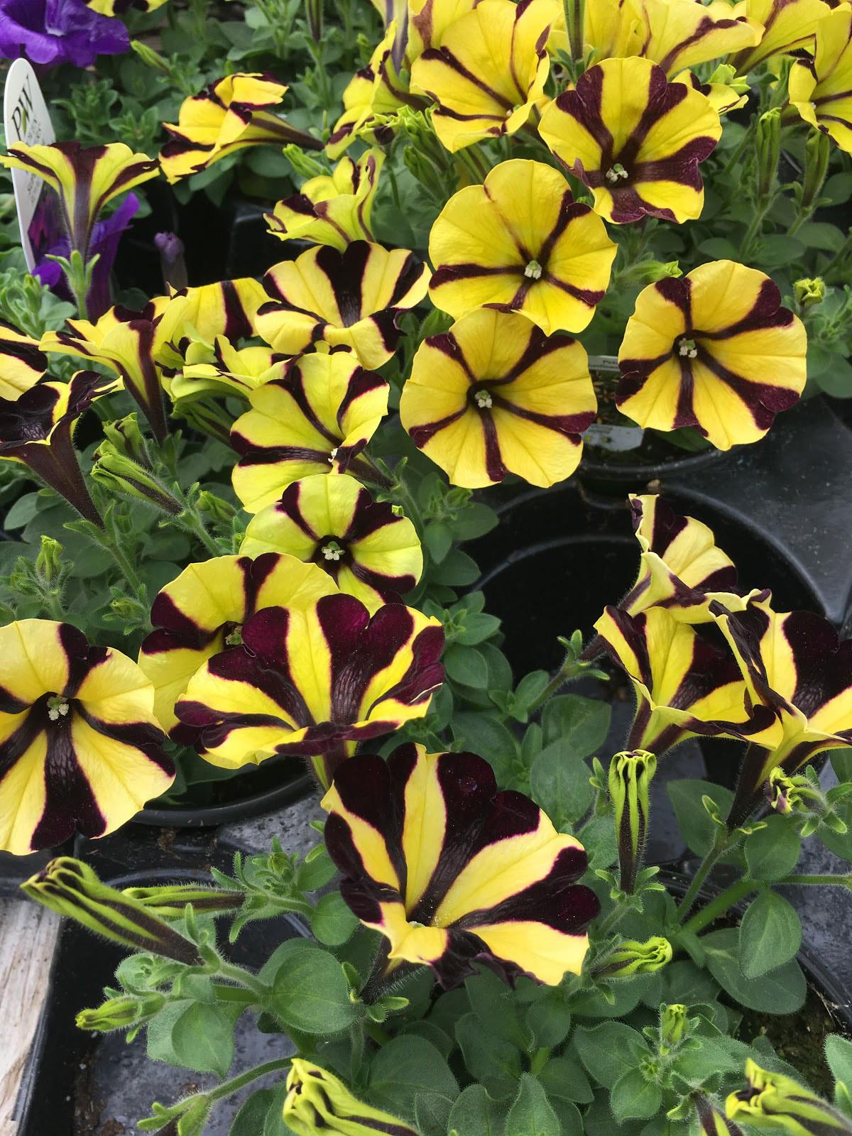 Green House, Garden Center, Westchester Flower Shops, Indoor Plants, Outdoor Plants, NY Nurseries, Nursery, Landscaper, Florist.