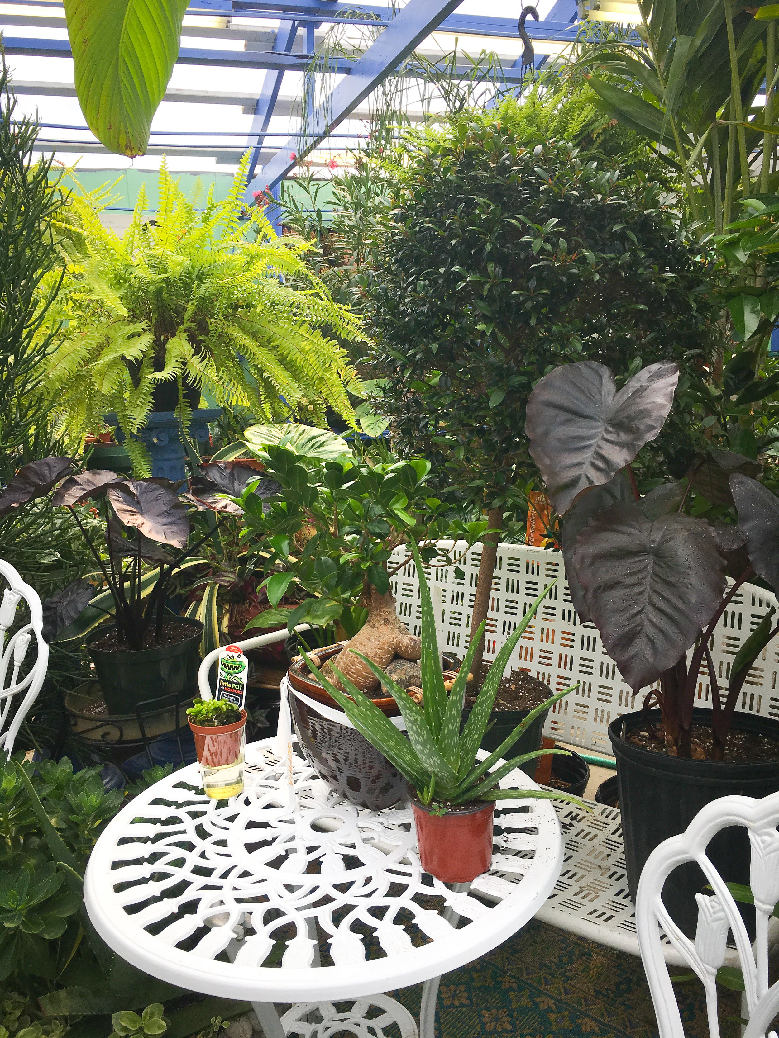 Succulents, Green House, Garden Center, Westchester Flower Shops, Indoor Plants, Outdoor Plants, NY Nurseries, Nursery, Landscaper, Florist, indoor Decoration, Outdoor Furniture.