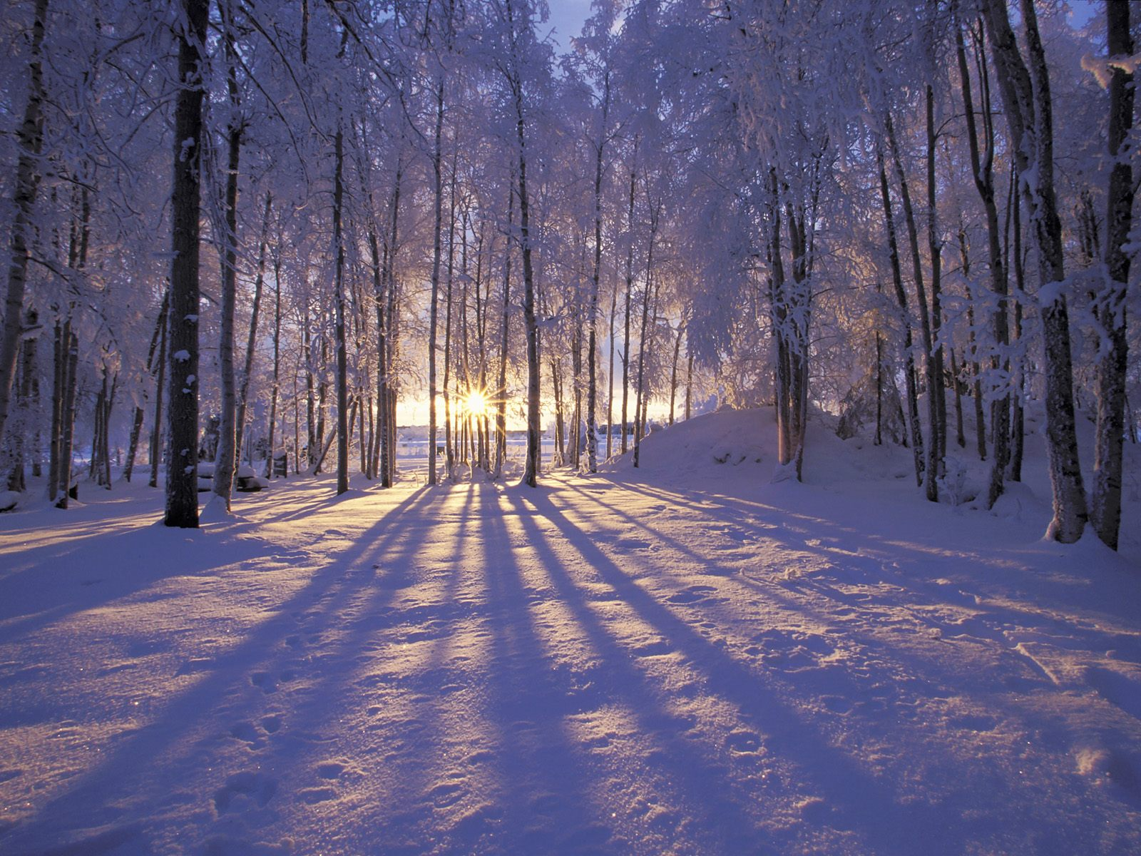 The magic of light on a winter's day- it can chase away the blues if you surround yourself with it.