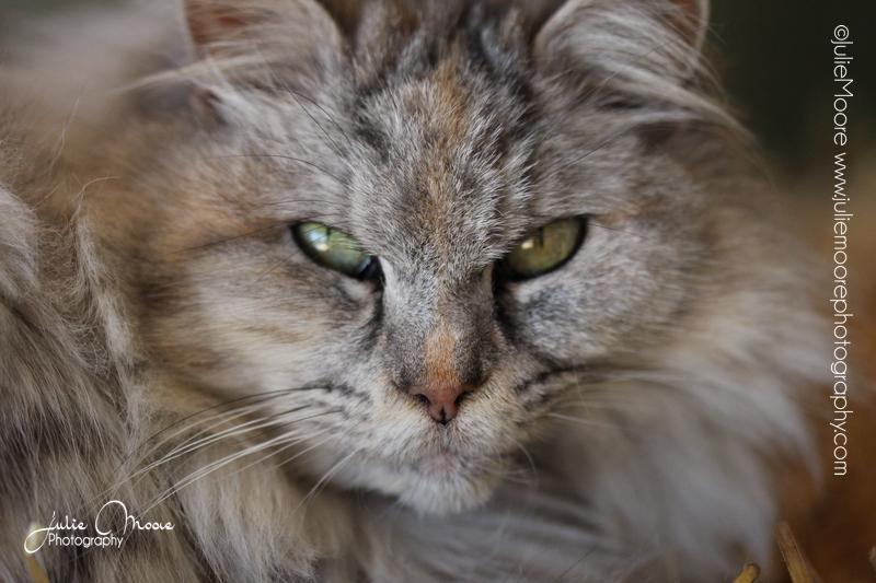 Pet-Portrait-Photography-Austin-TX-JulieMoore- - 3.jpg