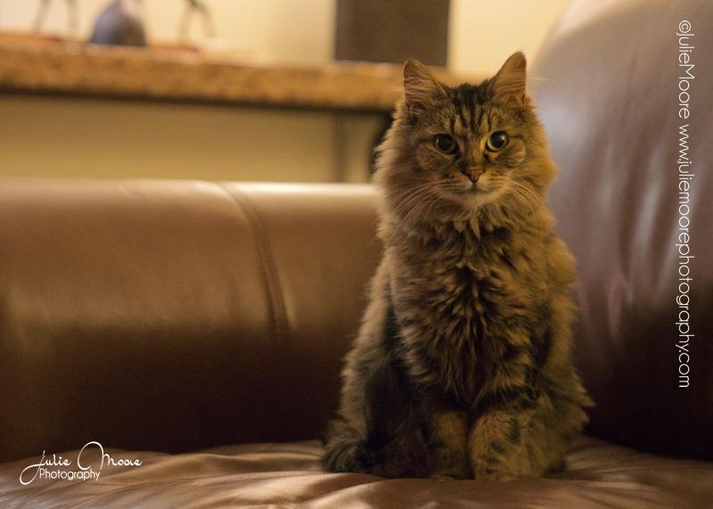 Pet-Portrait-Photography-Austin-TX-JulieMoore- - 18.jpg