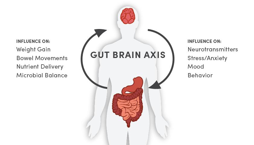 gut-brain-axis-digestion-brainworks-of-oregon.png
