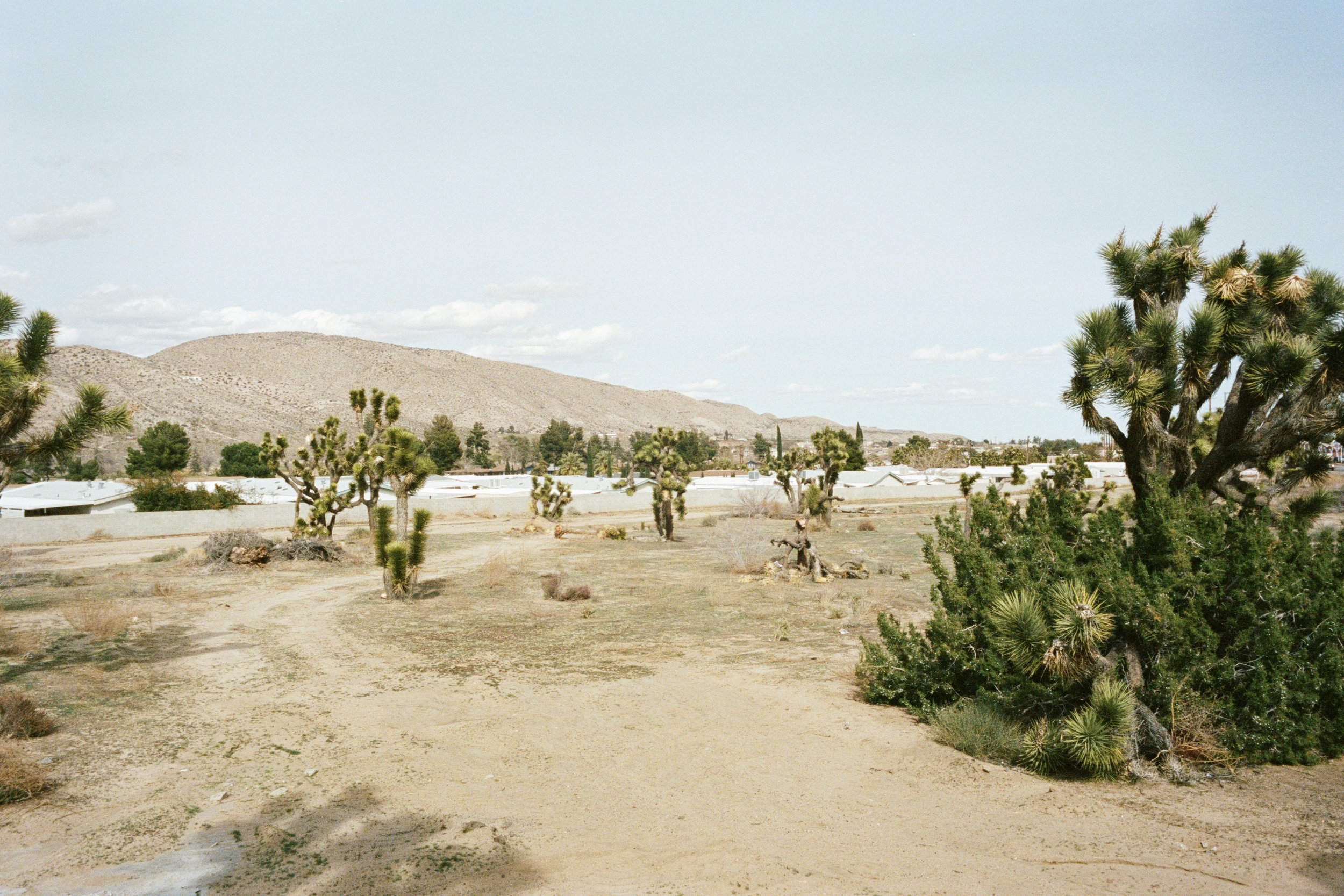 Mobile home park roofline at ground level, CA desert, 2018 - 35mm Portra