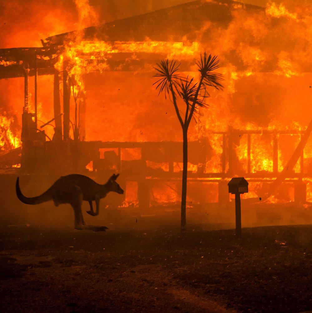31ozf-fires-kangaroo-mobileMasterAt3x-v2.jpg