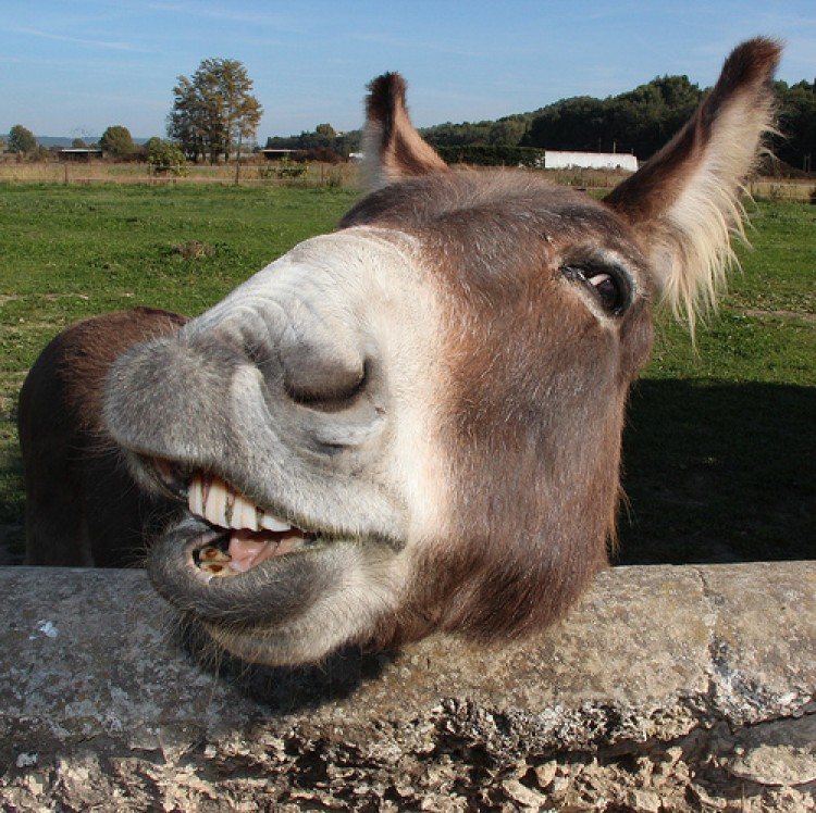 butch, the burro