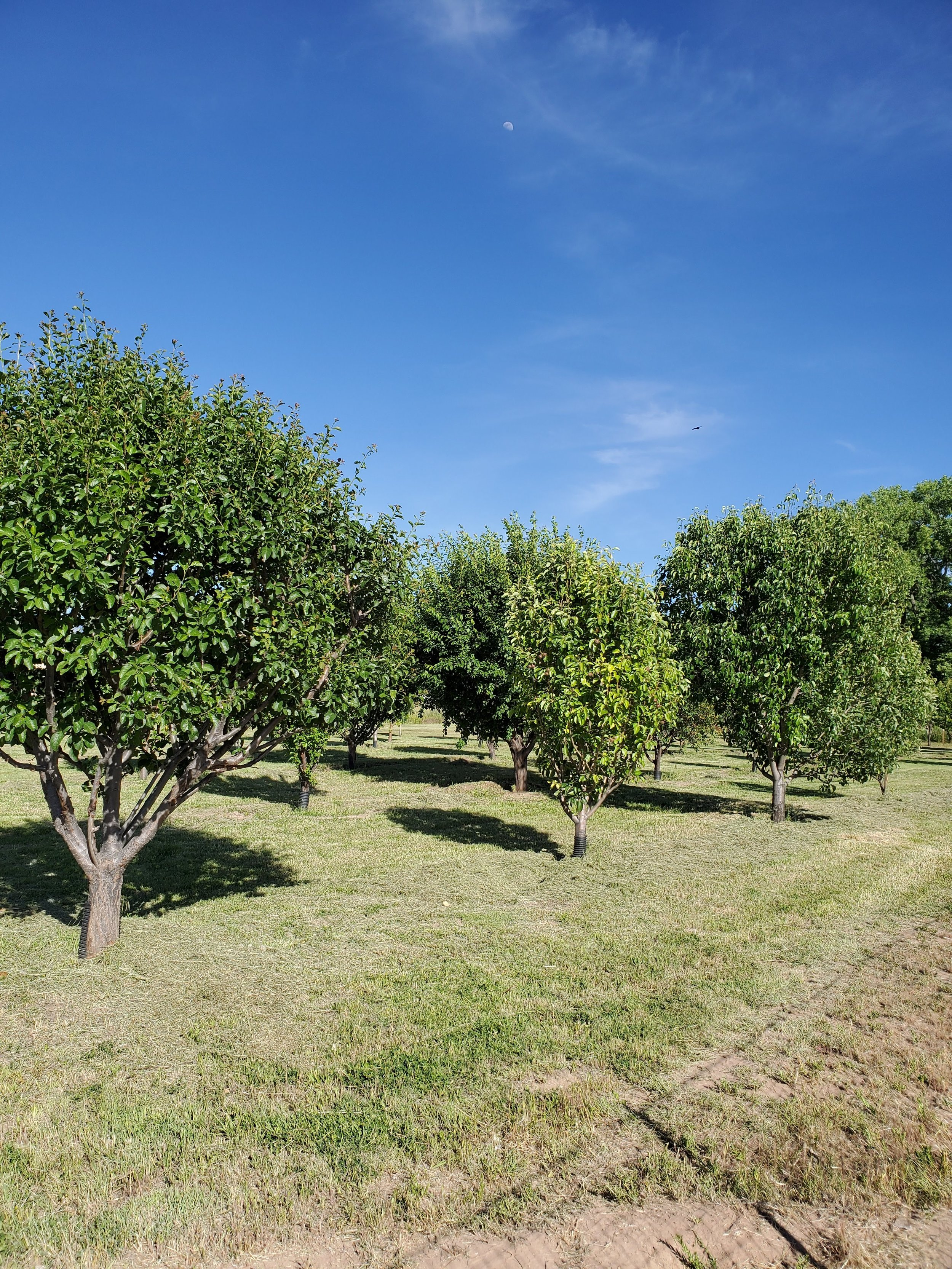 The Jacona Orchard, Directly Across from Vistas