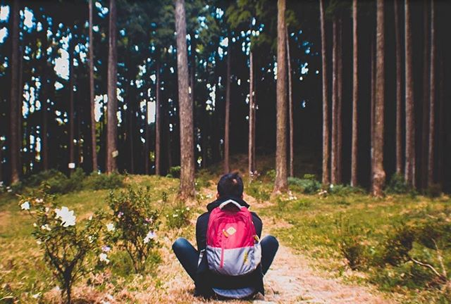 An afternoon in the woods. • • • • • #lamahatta #darjeeling #darjeelingdiaries #forest #statepark #woods #travelphotography #natgeoindia #natgeotravel #wanderlust #everydayindia @everydayindia @natgeotravel @natgeocreative