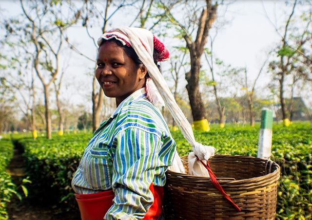 """A majority of tea pickers in India are women. In the process of ensuring the world's caffeine fix, they often neglect their own health. Many don't know why or how menstruation occurs. When asked for common names for menstruation, the women say """"monthly illness"""" or """"something untouchable"""". I am so excited to be a part of the important work of @sikunrelief where, through workshops, we attempt to break period related taboos, gender based social stigma, and increase awareness about menstrual health and hygiene amongst girls and women, in disaster and conflict prone areas like Assam. • • • • • #menstrualhealth #menstruation #periods #womenshealth #gendernorms #teagardens #assam #natgeoyourshot #natgeotravel #natgeocreative #everydayindia #wanderlust #travelphotography #travel"""