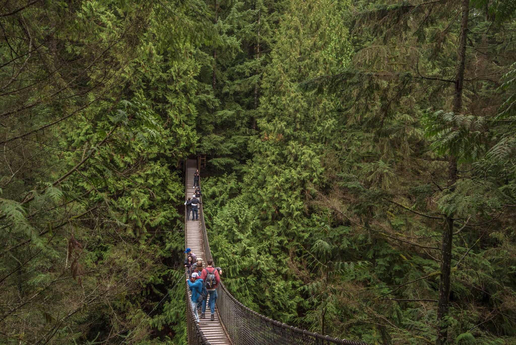 Lynn Creek suspension bridge