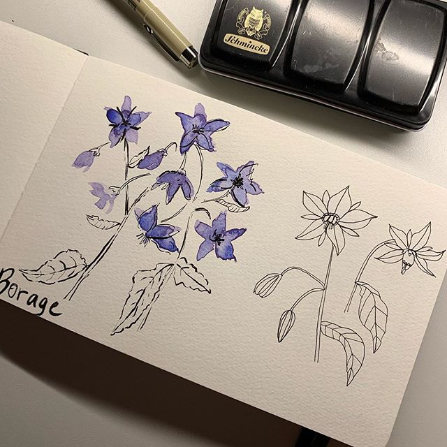 Days 2 - 7 for #inktober in my #moleskinesketchbook I thought I'd continue with the flowers for #bees theme! . . . . . . #inktober2019 #flowersforbees #windsorandnewtonink #watercolor_daily #inkdrawing #inkdrawings #inkdraw #illustration #sketchdaily #sketchbook #schminckewatercolor #floralsketch #flowerdrawing #flowersofinstagram #alliums #patternlicious #inkandpen #inkpen #inktoberday1 #inky #flowersforbees #beeflowers #micronpen #micronpens #micronpensketch #micronpendrawing
