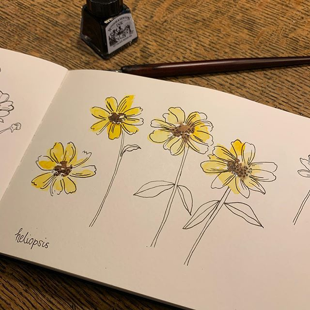 Bit slow with my posting but still keeping up! Days 8 - 10 for #inktober in my #moleskinesketchbook flowers for #bees ! . . . . . . #inktober2019 #flowersforbees #windsorandnewtonink #watercolor_daily #inkdrawing #inkdrawings #inkdraw #illustration #sketchdaily #sketchbook #schminckewatercolor #floralsketch #flowerdrawing #flowersofinstagram #alliums #patternlicious #inkandpen #inkpen #inktoberday1 #inky #flowersforbees #beeflowers #micronpen #micronpens #micronpensketch #micronpendrawing #watercolorpencils
