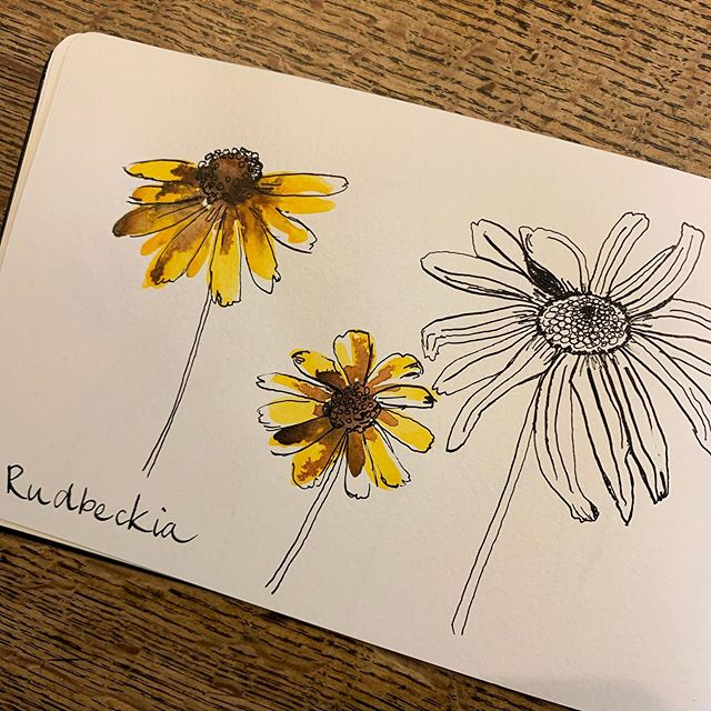 And a few more from #inktober in my #moleskinesketchbook Only a couple more days to go but I've loved picking up my dip pen again! . . . . . . #inktober2019 #flowersforbees #windsorandnewtonink #watercolor_daily #inkdrawing #inkdrawings #inkdraw #illustration #sketchdaily #sketchbook #schminckewatercolor #floralsketch #flowerdrawing #flowersofinstagram #alliums #patternlicious #inkandpen #inkpen #inktoberday1 #inky #flowersforbees #beeflowers #micronpen #micronpens #micronpensketch #micronpendrawing #watercolorpencils #flowersforbees #bees #beeflowers