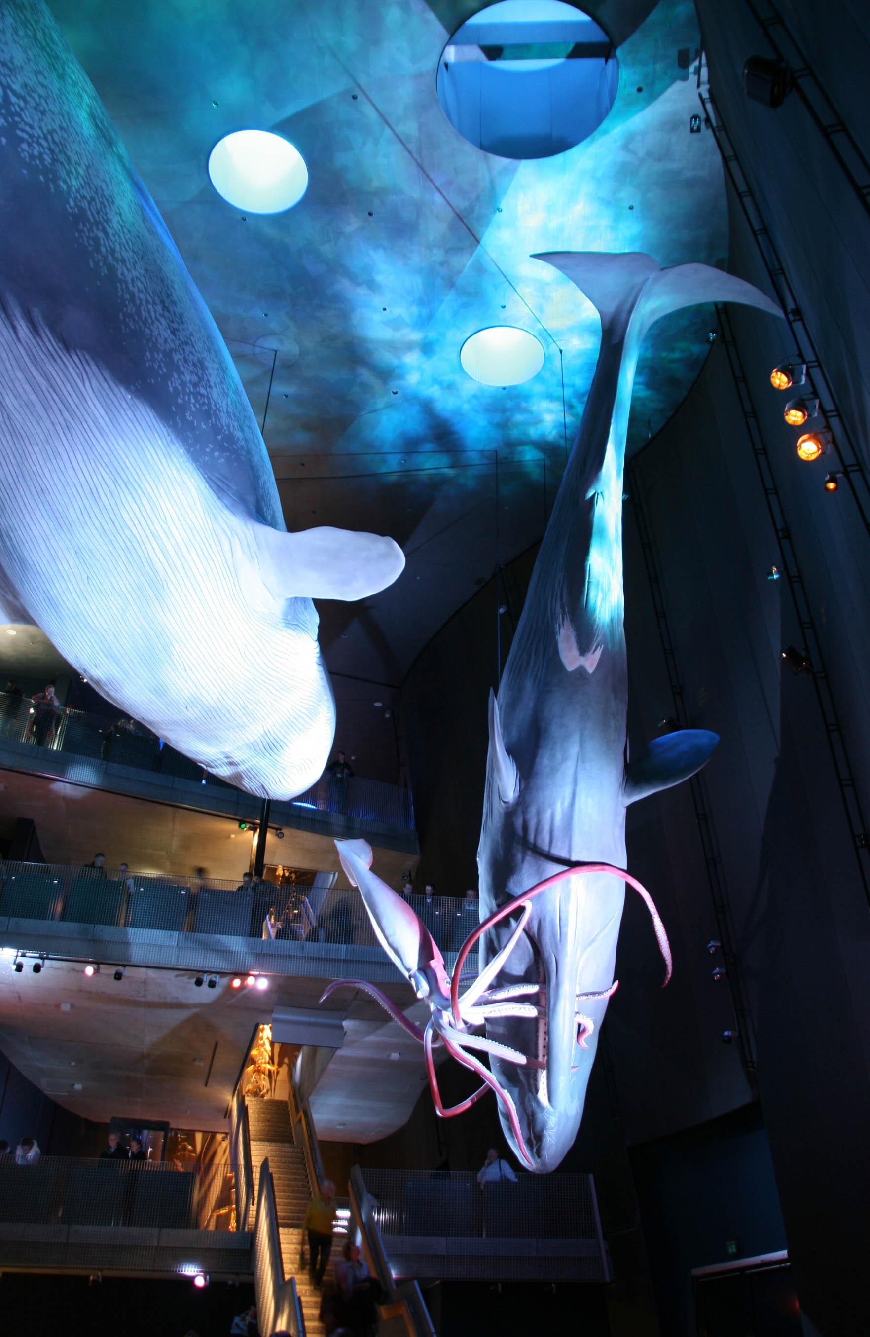 Riesen der Meere (8).jpg