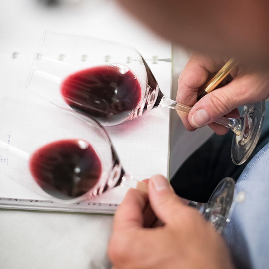 Wijncursus - Samen Wijn Beleven: jouw smaken en voorkeuren ontdekken , een unieke verrijking van uw smaakpallet
