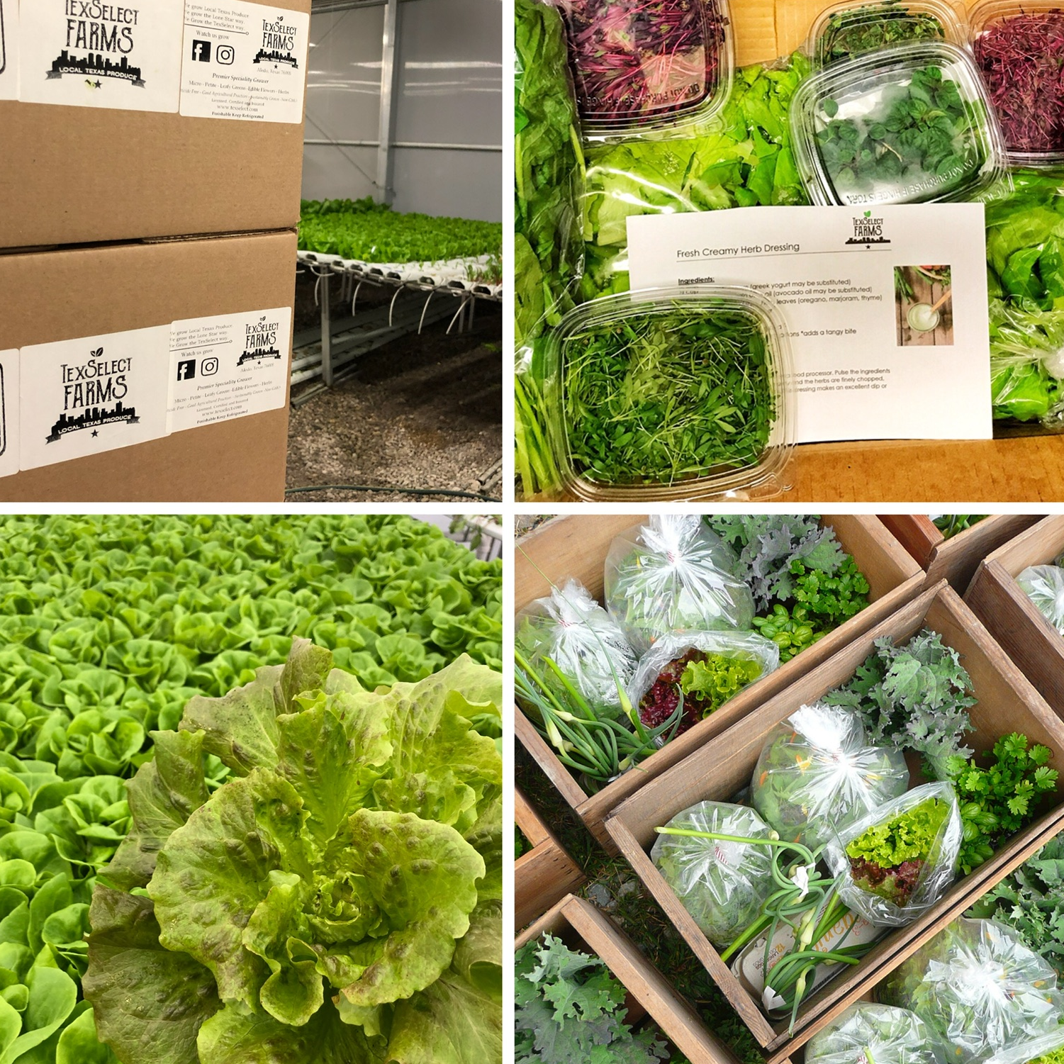Our weekly harvest box offers fresh and bountiful variety of fresh local produce