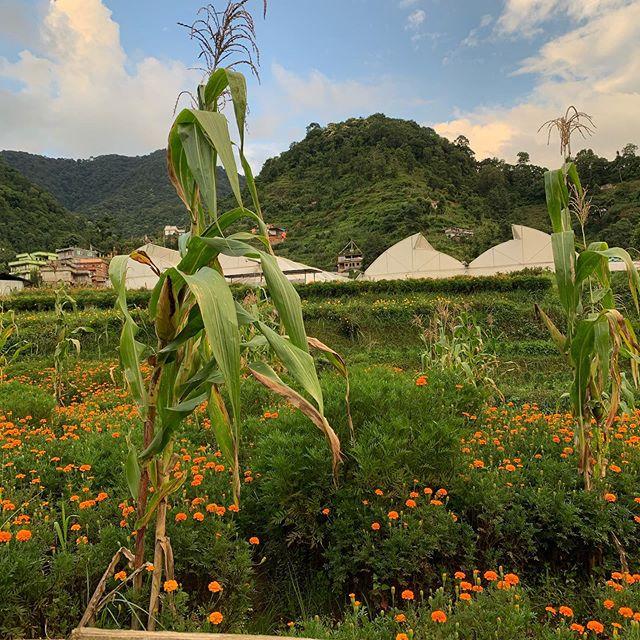 Marigolds & Corn • • • #streetphotography #flowers #marigold #corn #travelphotography #nepal #kathmandu #thejeremyeaton