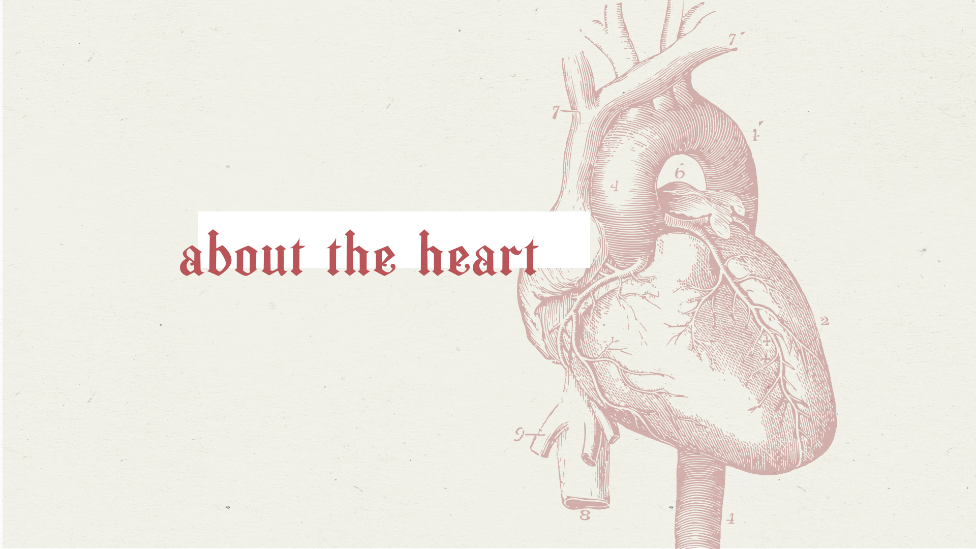 About The Heart