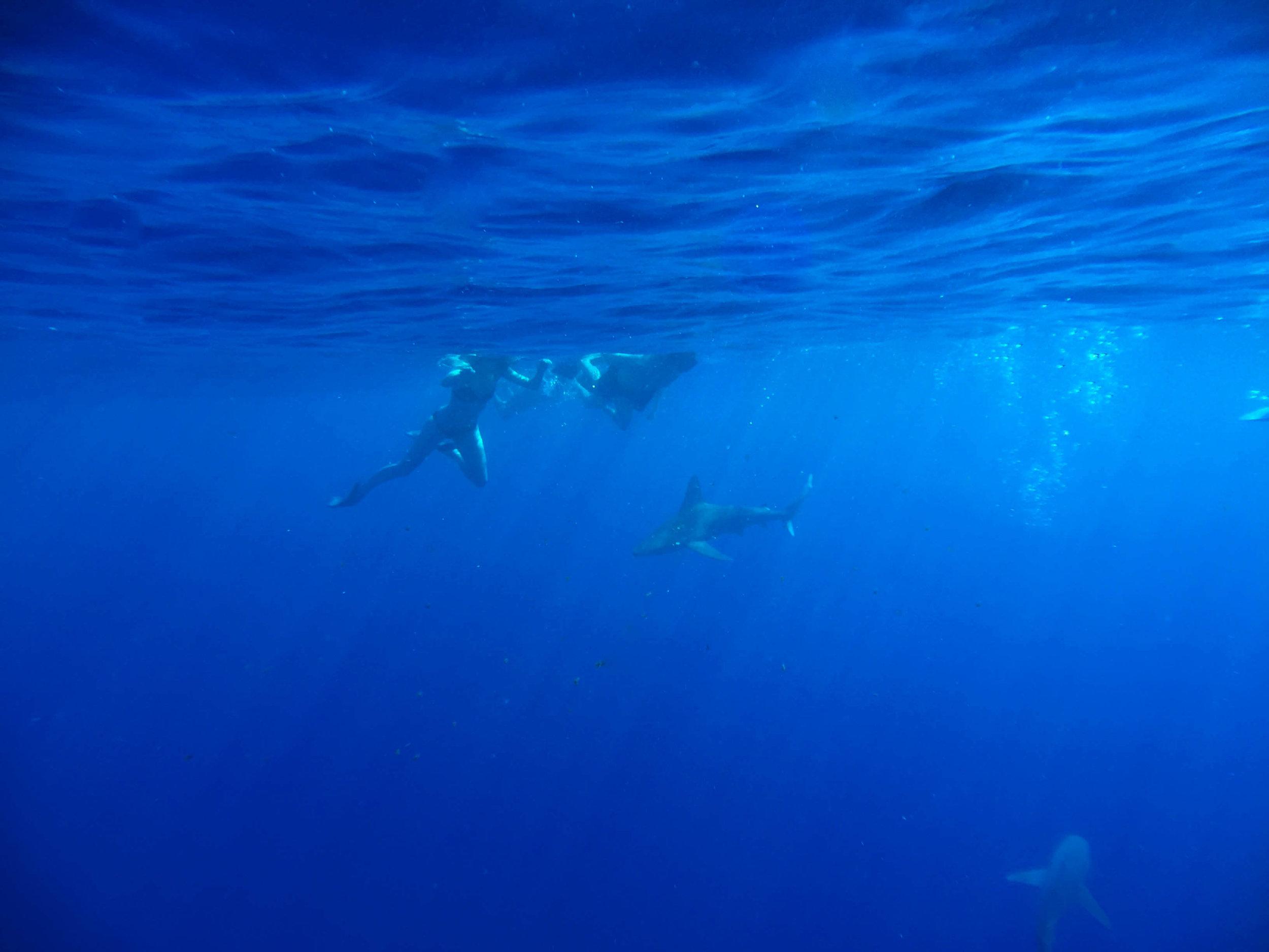 Oahu Hawaii Shark Swimming