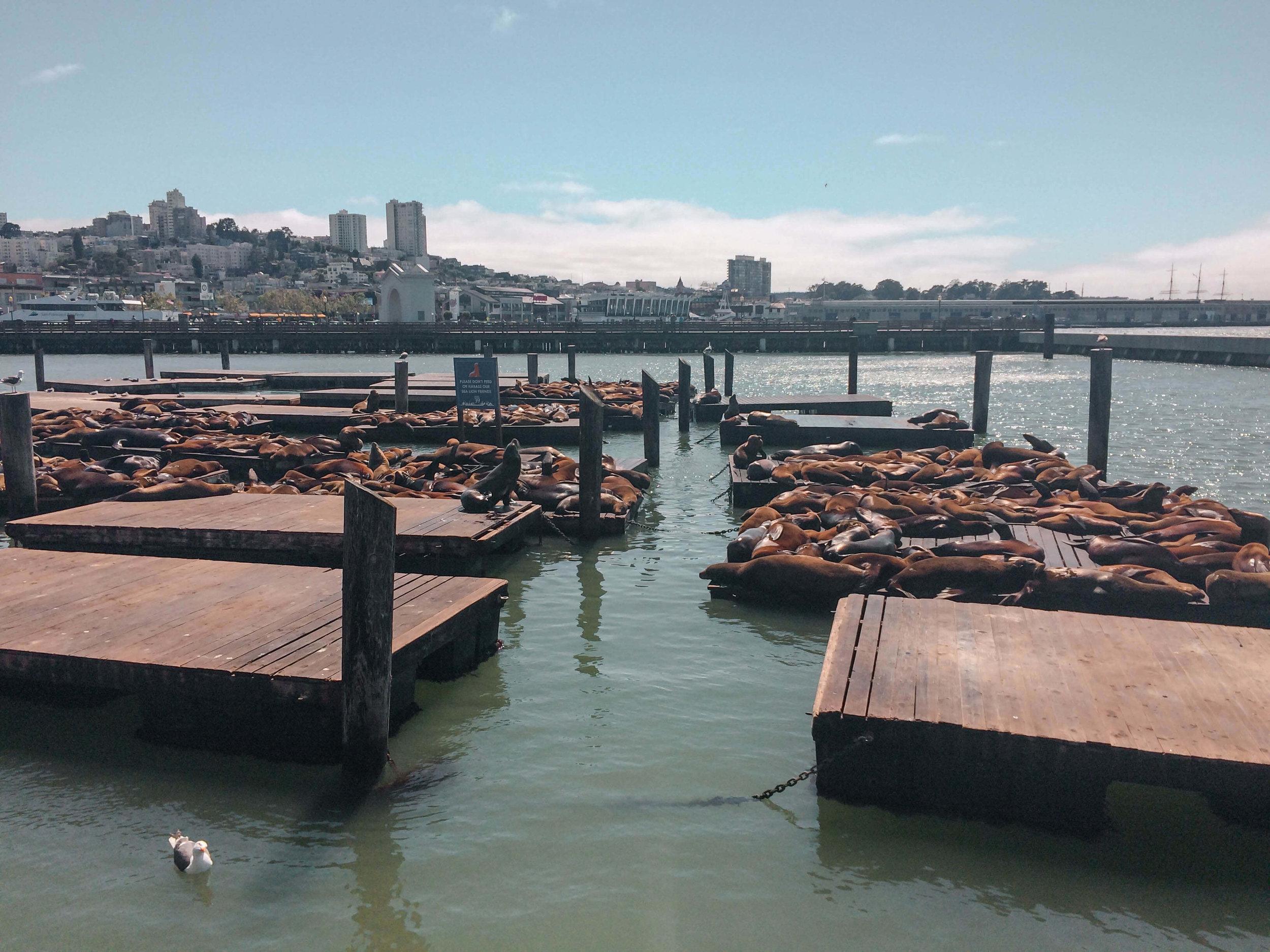 San Francisco Top 10 Things Pier39 Sea Lions.jpg