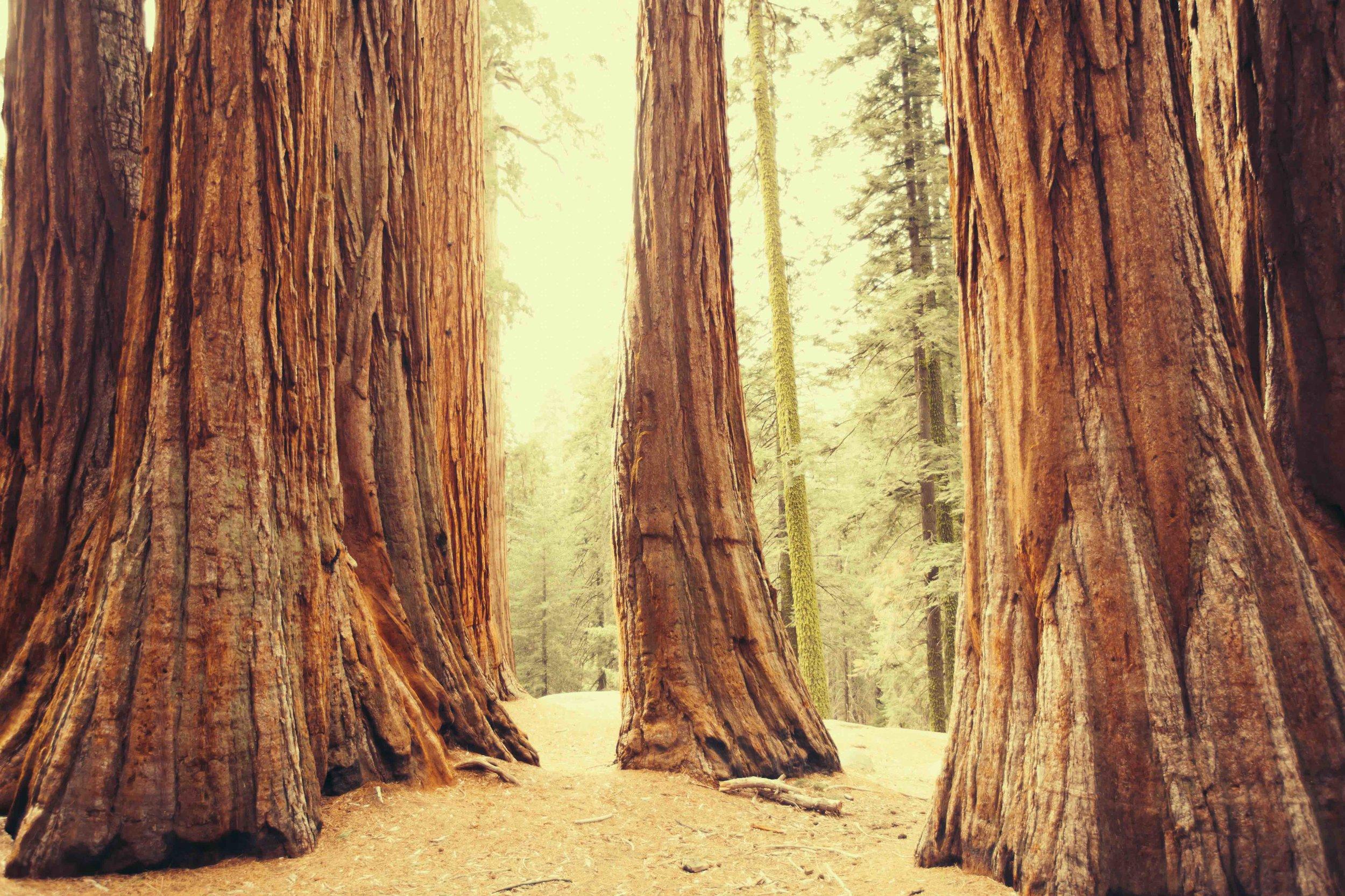 redwood-thumbnail-.jpg