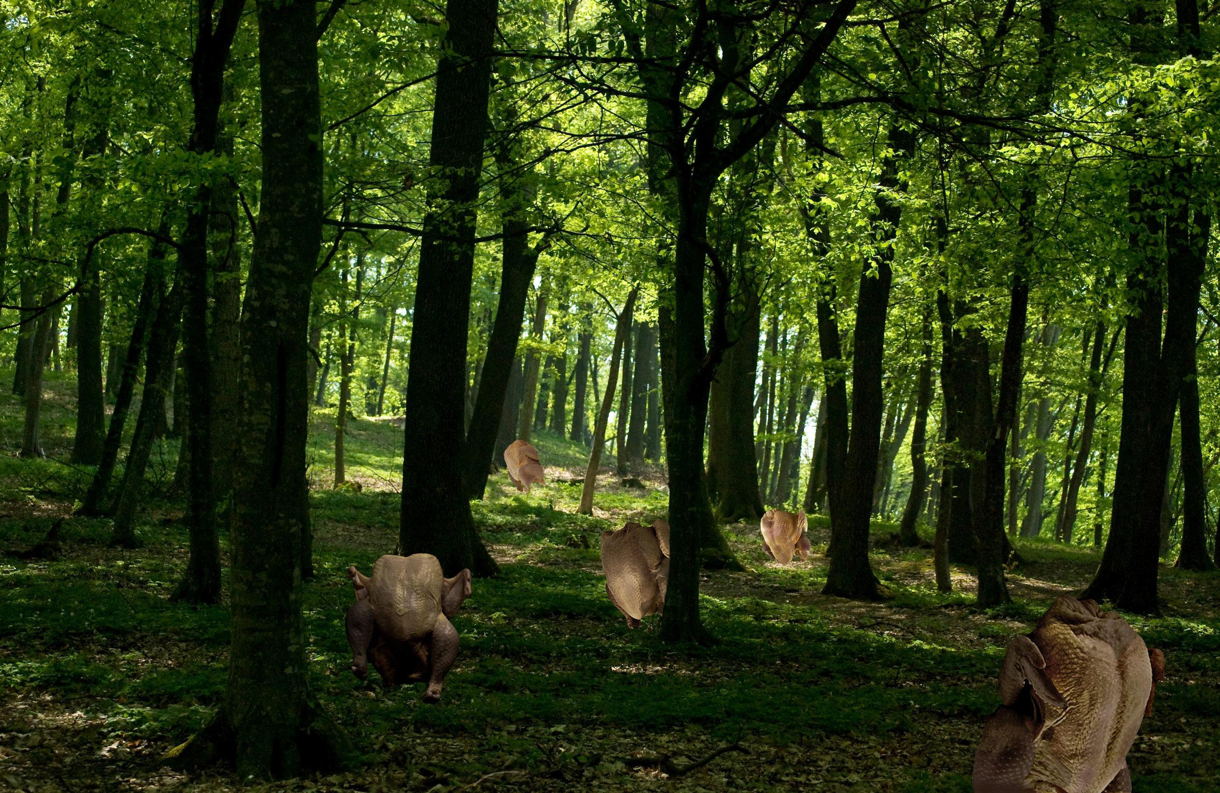 chicken-forest2.jpg
