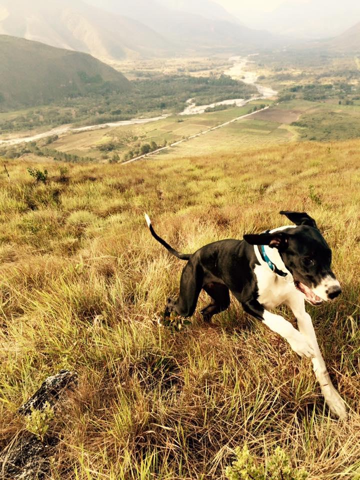 perros2.jpg