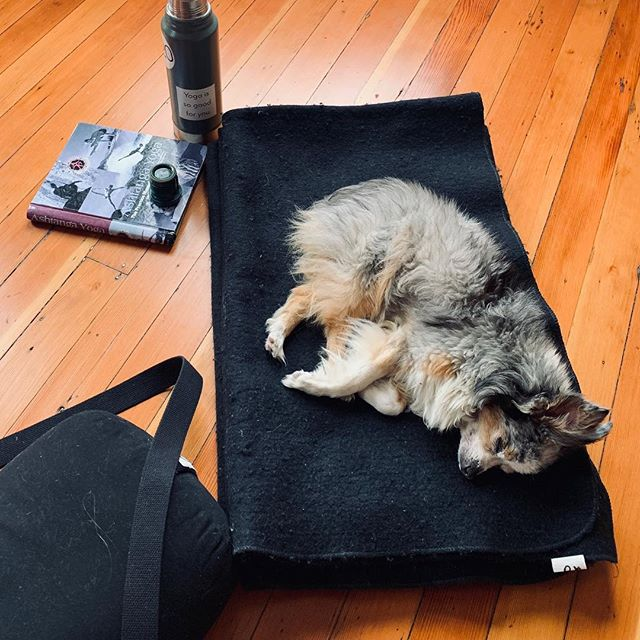 My little yoga buddy. She knows what Open Studio is all about. You do whatever you want. MTTF 6am-10am #yogaissogoodforyou