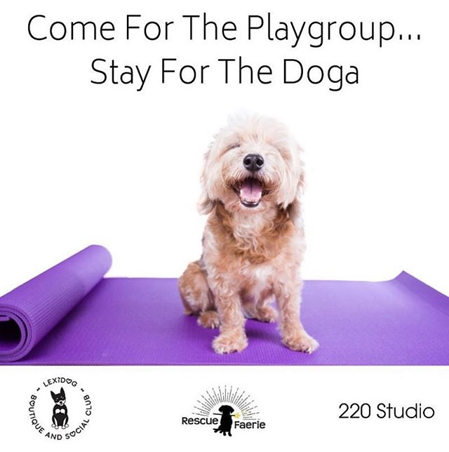 Sign up for the first Dog Yoga class on June 1st at 2pm @lexidogsocialclub ! 🐶 taught by @scorpiondogyoga  This class is $15 with proceeds benefiting @rescuefaerie.... Taught by @scorpiondogyoga scorpiondogyoga