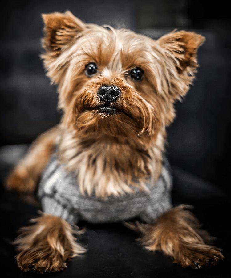 louis-shop-dog.png