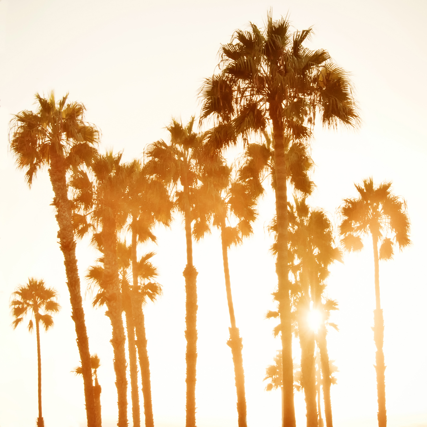 CALIFORNIA SUN