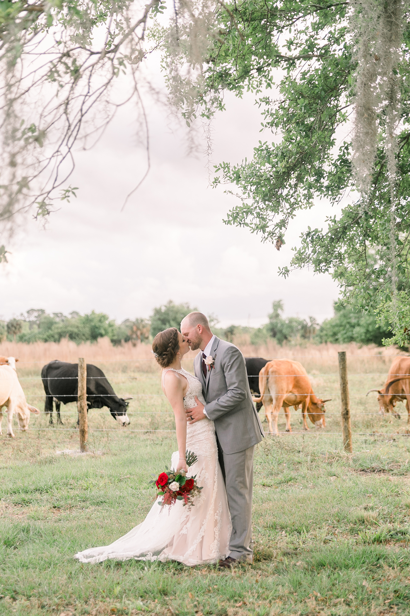 cows at bayshore ranch lori kelly photography.jpg