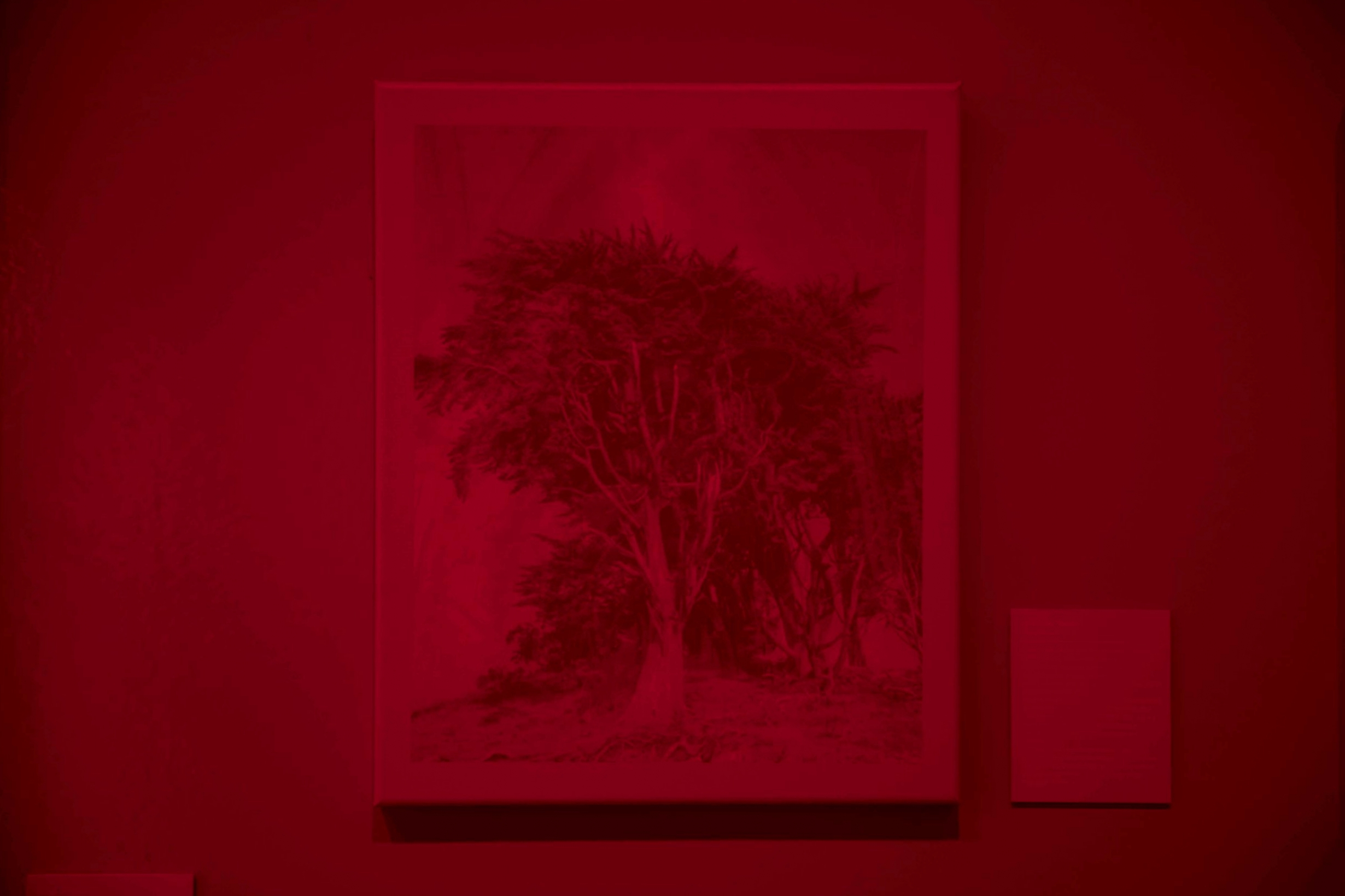 Red Room CHI_C1_an8i0564.jpg