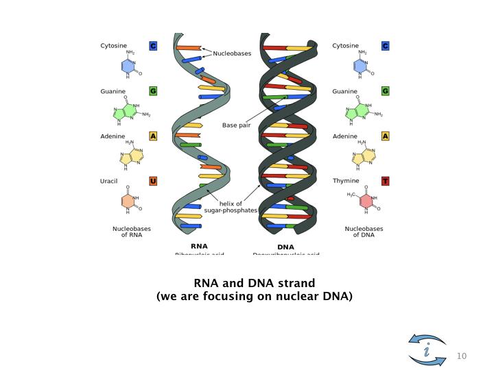 Introduction to Nutrigenomics.010.jpeg