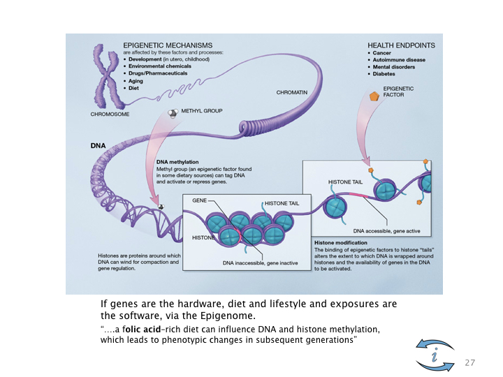 Introduction to Nutrigenomics.027.jpeg