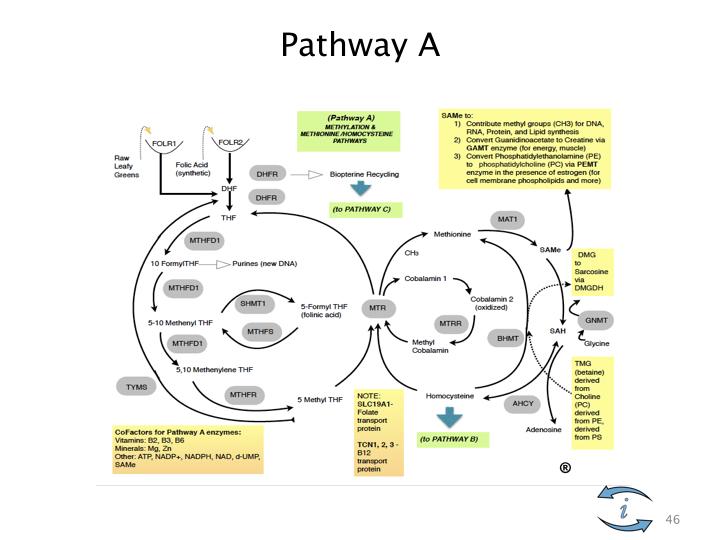 Introduction to Nutrigenomics.046.jpeg