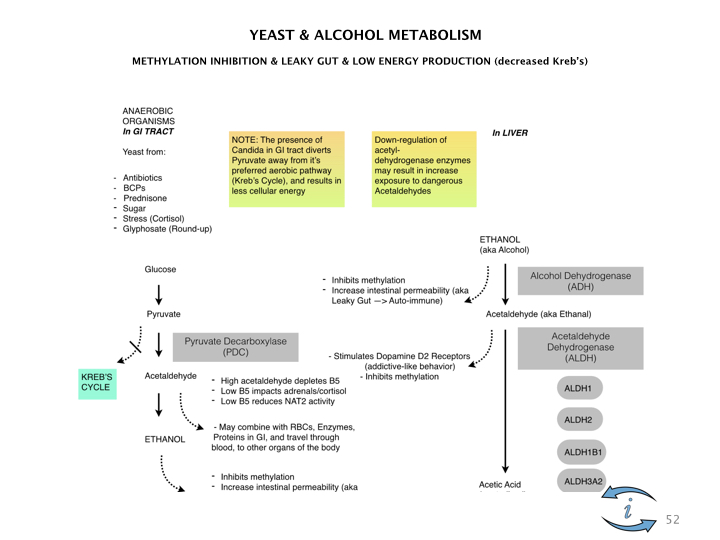 Introduction to Nutrigenomics.052.jpeg